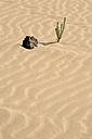 Spain, Fuerteventura, Parque Natural de Corralejo, plant and lava rock at sand dune - VI000094