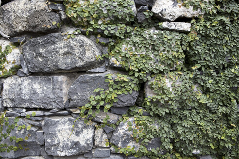 Portugal, Funchal, close up of an old stone wall - VTF000050