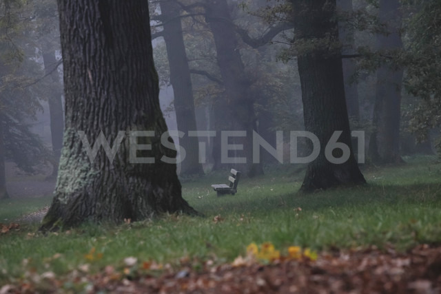 Germany, foggy oak forest in autumn - JTF000503