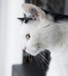 Germany, Aachen, portrait of a male cat - HLF000299