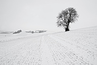 Germany, Rhineland-Palatinate, Neuwied, snow covered winter landscape with single tree - PAF000065