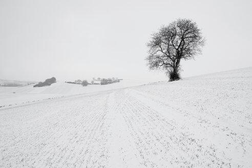 Germany, Rhineland-Palatinate, Neuwied, snow covered winter landscape with single tree - PAF000065