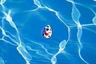 Italy, swimming pool, floating football duck - GWF002414