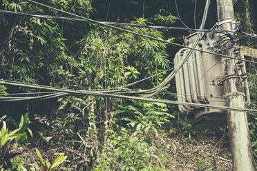 Brazil, Rio de Janeiro, Corcovado, Electric wires with vegetation in the background - AMCF000008
