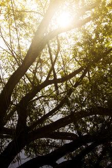 Brazil, Rio de Janeiro, Corcovado, Light passing through the trees at sunset - AMCF000015