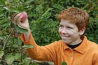 Smiling boy picking an apple - LB000433