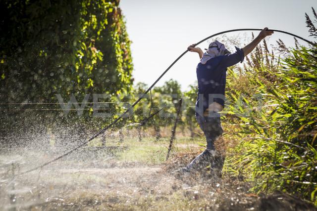 Australia, Carnarvon, Farmer installing irrigation system - MBE000965 - Martin Benik/Westend61