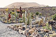Spain, Lanzarote, view to Jardín de Cactus de Lanzarote - MFF000692