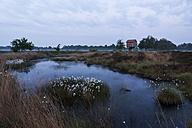 Germany, North Rhine-Westphalia, Recker Moor, Landscape with cotton grass - PAF000098
