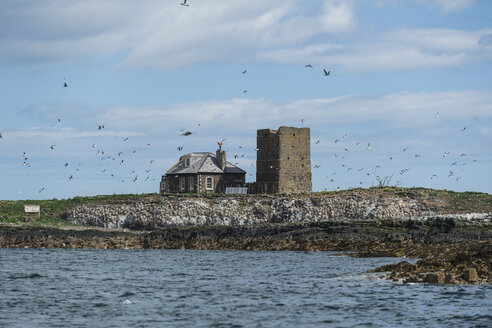 Great Britain, England, Northumberland, Farne Islands, puffins and common murres - PA000114