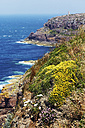 France, Bretagne, Cap Frehel, Lighthouse and landscape with gorse and heather - BIF000249