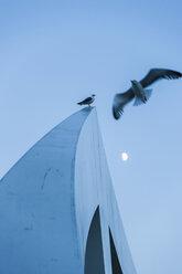 Great Britain, Scotland, Glasgow, footbridge, gulls and half moon - PAF000186