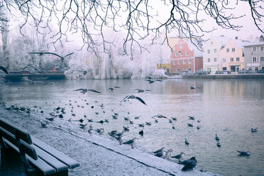Germany, Bavaria, Landshut, isar promenade and seagulls, morning mist - SARF000180