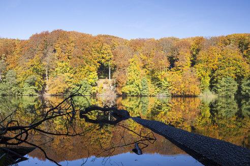 Germany, Mecklenburg-Western Pomerania, Ruegen, Jasmund National Park, Herthasee in autumn - WIF000253