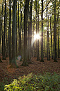 Germany, Mecklenburg-Western Pomerania, Ruegen, Jasmund National Park, beech forest against the sun - WIF000256