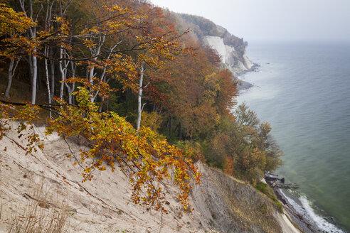Germany, Mecklenburg-Western Pomerania, Ruegen, Jasmund National Park, chalk cliff - WIF000259