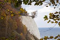 Germany, Mecklenburg-Western Pomerania, Ruegen, Jasmund National Park, chalk cliff - WIF000261