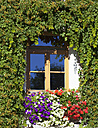 Italy, South Tyrol, Innichen, Flowers and ivy on house front - WWF003006