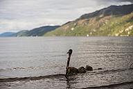 Great Britain, Scotland, Lake Loch Ness, Loch Ness Monster - PAF000231