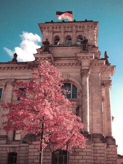 cherry tree (cornus mas) in front of the Reichstag, Berlin, Germany - FBF000111