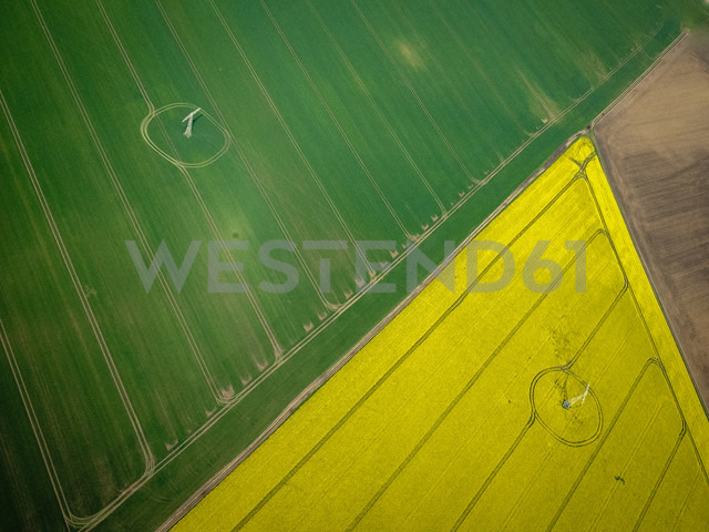 Electricity pylons in field of canola (Brassica rapa), aerial view, Mecklenburg, Germany - FBF000109 - Frank Blum/Westend61