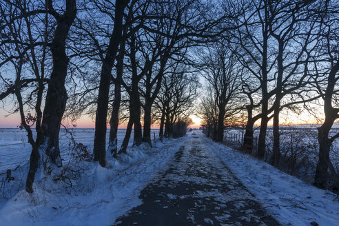 Germany, Lower Saxony, avenue in winter by sunset - SJF000081