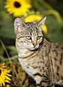 Portrait of tabby kitten - SLF000252