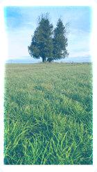 Tree, Bavaria, Germany - MAEF007594