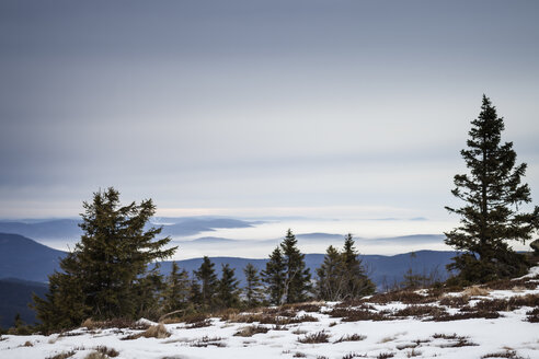 Germany, Bavarian Forest, Great Arber in winter - SBDF000433