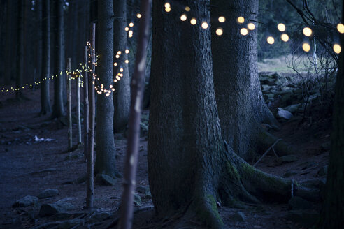 Germany, Bavaria, Sankt Englmar, Fairy lights in forest - SBDF000444