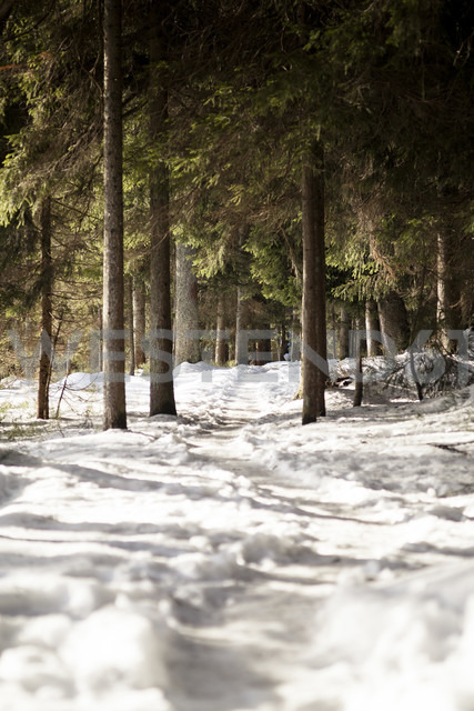Germany, Bavaria, Snow-capped path at Grosser Arber - SBDF000445 - Susan Brooks-Dammann/Westend61