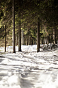 Germany, Bavaria, Snow-capped path at Grosser Arber - SBDF000445