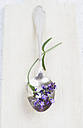 Blossoms of lavender (Lavendula) on spoon, close-up - GWF002481