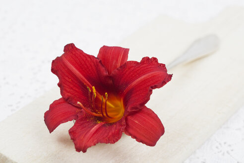 Blossom of red daylilly (Hemerocallis) on spoon and wooden board, close-up - GWF002500