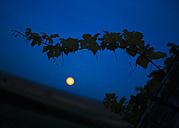 Austria, Lower Austria, Wine Quarter, Straning, grapevine and full moon at night - DISF000384