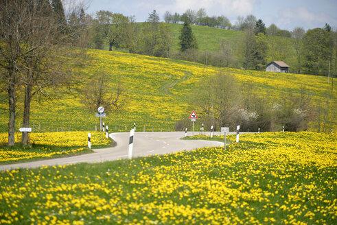 Germany, Bavaria, East Allgaeu, Seeg, view to empty street between flowering meadows - GN001281
