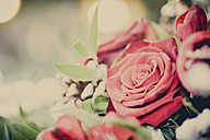 Red roses, close-up - MJF000643