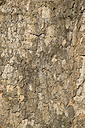 Germany, Baden-Wuerttemberg, Constance, bark of sycamore (Platanus), close-up - ELF000814