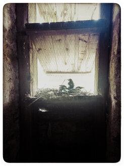 Germany, Black Forest, crows nest - KRPF000095
