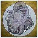 Studio, octopus on plate - KRPF000163