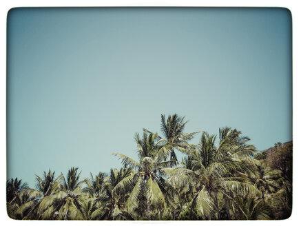 Indonesia, Lombok, Palms at beach - KRPF000112