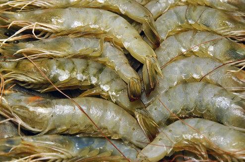 Germany, North Rhine-Westphalia, Minden, row king prawns in packaging - HOHF000378
