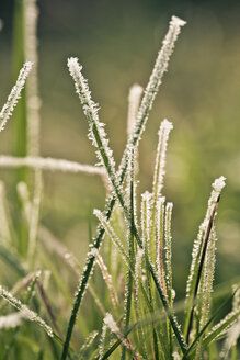Frost-covered blades of grass, close-up - SARF000225