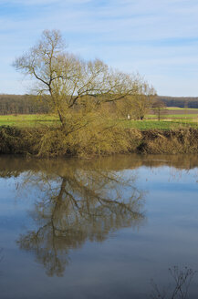Germany, Hesse, Limburg, tree and water reflections at Lahn river - MHF000265