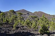 Spain, Canary Islands, La Palma, San Martin volcano, Cumbre Vieja near Fuencaliente - SIEF004987