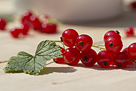 Leaf and red currants on wood, close-up - YFF000002