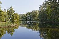 Austria, Vorarlberg, Hard, Scheienloch,  Nature Reserve Rhine Delta, mouth of the Rhine - SIEF004999