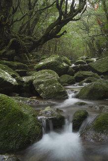 Japan, Yakushima, Waterfall in the rainforest - FL000377