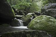 Japan, Yakushima, Waterfall in the rainforest - FL000373