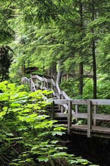 Canada, British Columbia, Mount Revelstoke National Park, Giant Cedars Boardwalk Trail - FOF005675